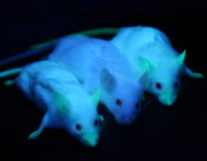 gfp_mice_credit-ingrid-moen-cc-2-0